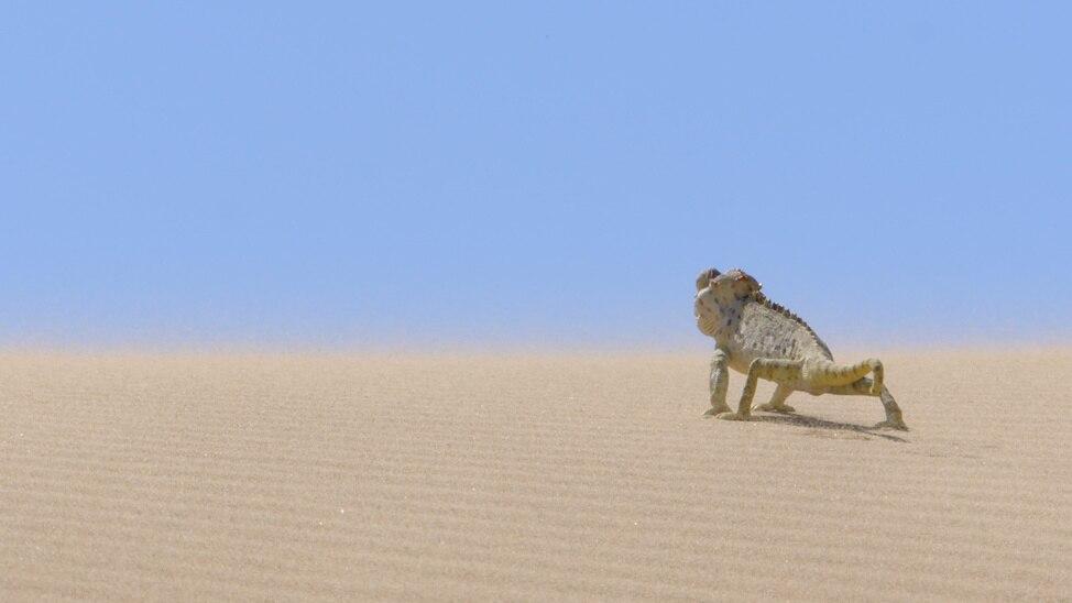 Episode 2 - Namib: Land Of Extremes