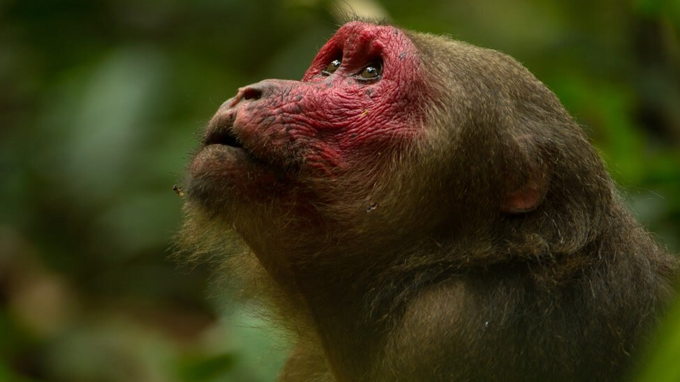 EPISODE 1 - Growing Up Gibbon