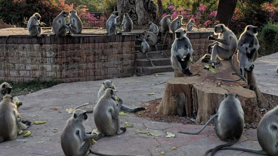 EPISODE 8 - Temple Monkeys On The Run