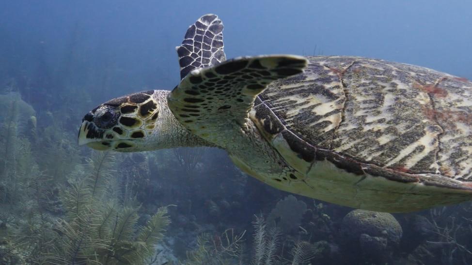 Episode 4 - The Mesoamerican Reef
