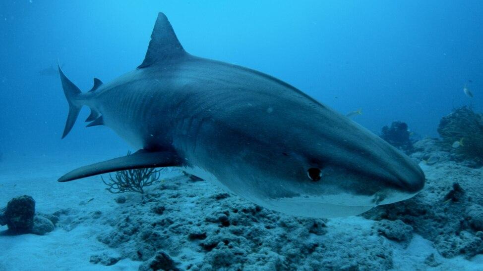 Episode 2 - Bimini Sharklab