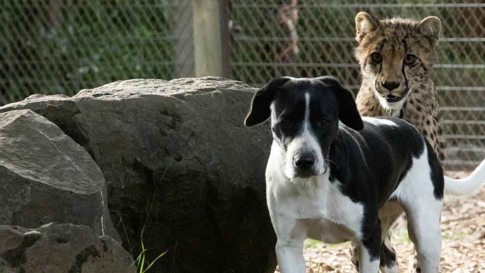 EPISODE 4 - Amazing Animal Friends   4