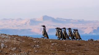 Wild Peruvian Coast