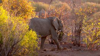 Wild Namib: Land Of Extremes image