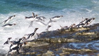 Falkland Island Invasion