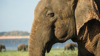 Loka The Baby Elephant