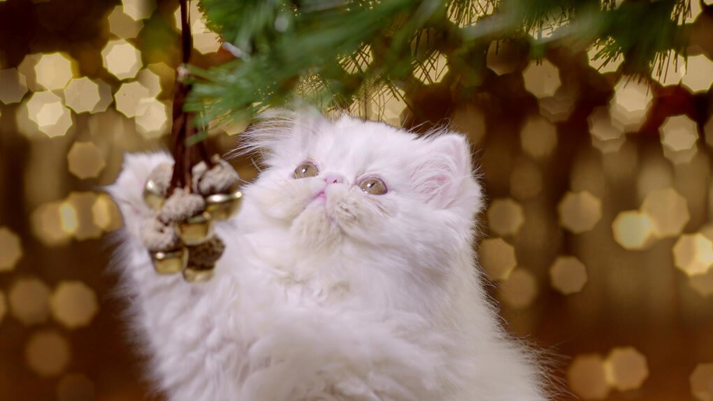 Kittens With Bauble