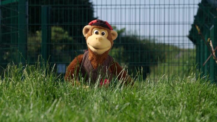 Watch Milkshake Monkey Online