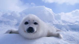 Wildest Arctic image