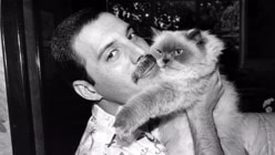 Freddie Mercury: The Great...