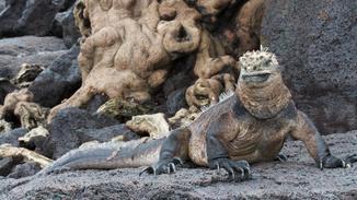 David Attenborough's Galapagos image