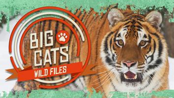 Big Cats: Wild Files