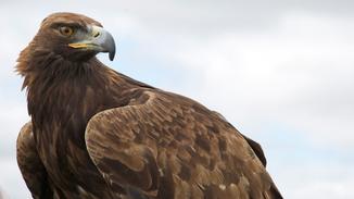 North American Birds image