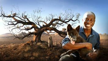 Dogs: An Amazing Animal...