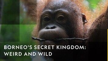Borneo's Secret Kingdom: Weird...