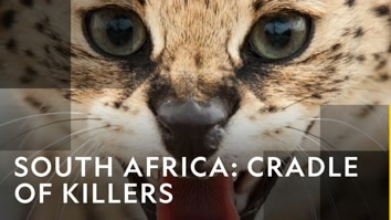 South Africa: Cradle Of Killers