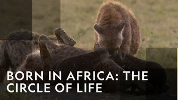 Born In Africa: The Circle...