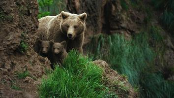 Wild Hunters