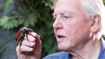 David Attenborough: Micro Monsters