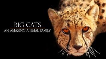 Big Cats...