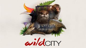 Attenborough - Wild City
