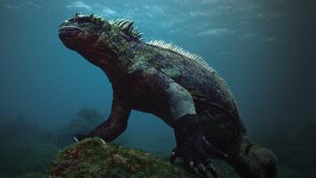 Making Attenborough's Galapagos