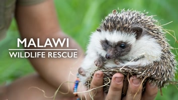 Malawi Wildlife Rescue