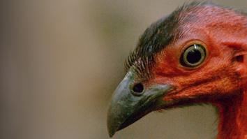 Wild Birds Of Australia