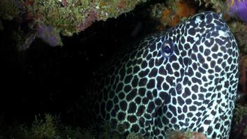 Africa's Underwater Wonders