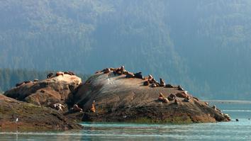 Alaskan Summer