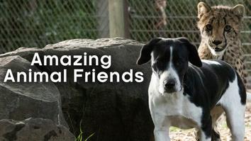 Amazing Animal Friends