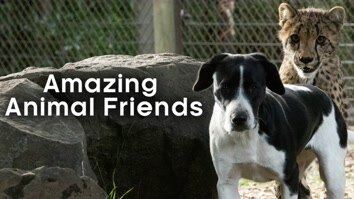Amazing Animal Friends