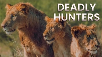 Deadly Hunters