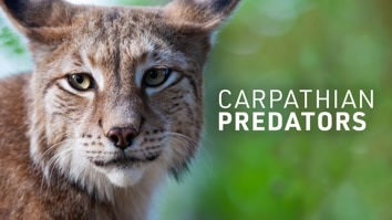 Carpathian Predators