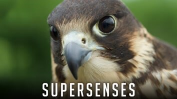 Supersenses