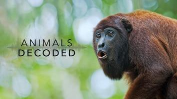 Animals Decoded