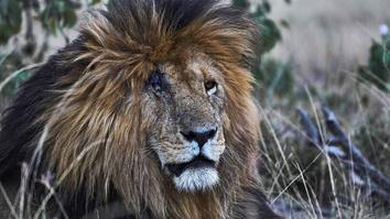 Safari Live: Gauntlet