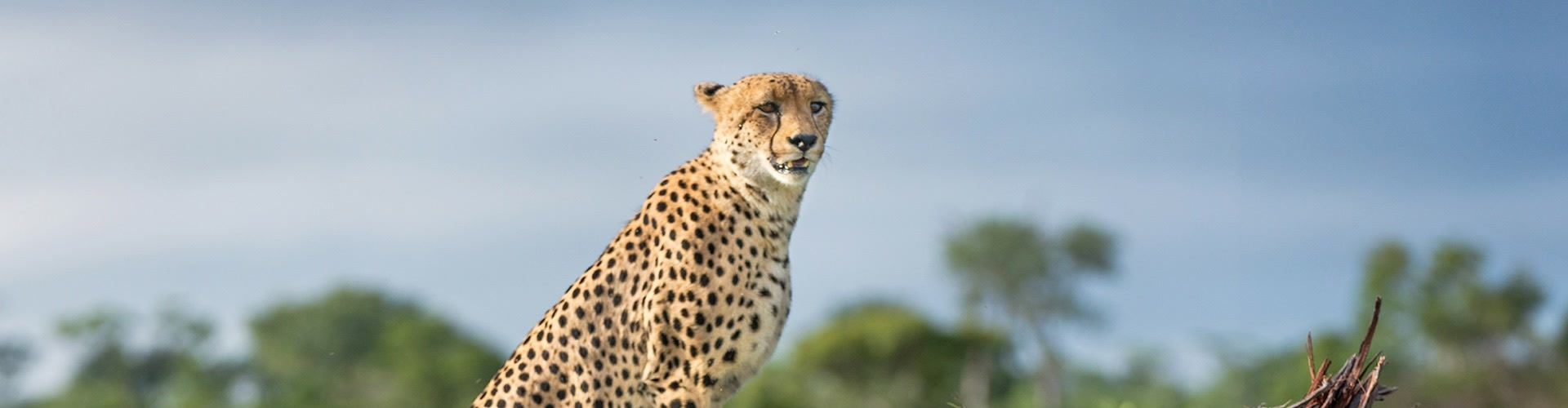 Watch Safari Live: Migration Online