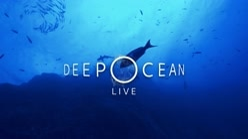 Deep Ocean Live: The Dive