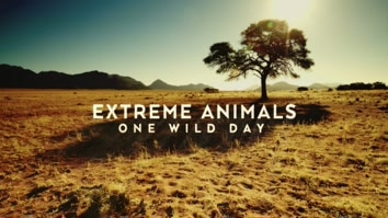 Extreme Animals: One Wild Day