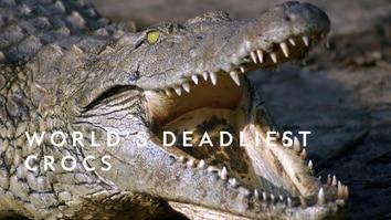 World's Deadliest Crocs