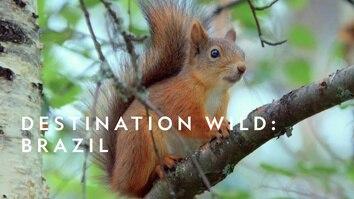 Destination Wild: Brazil