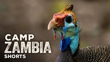Camp Zambia