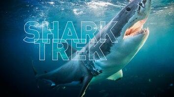 Shark Trek