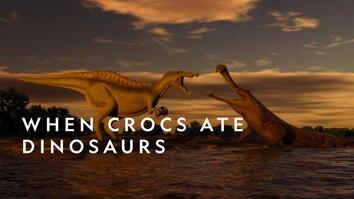 When Crocs Ate Dinos