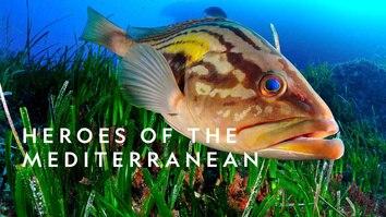 Heroes Of The Mediterranean