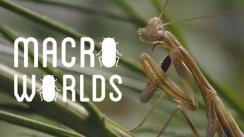 Macro Worlds