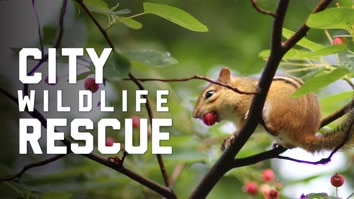 City Wildlife Rescue