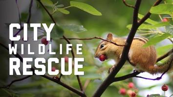 City Wildlife Rescue