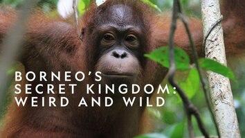 Borneo's Secret Kingdom: Weird and Wild